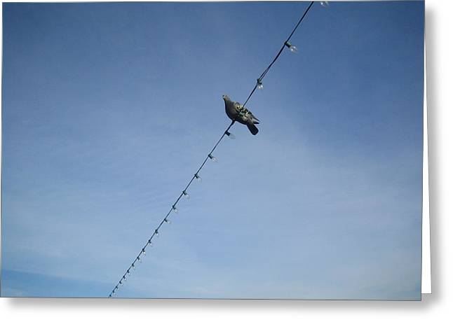 Bird On A Wire Greeting Card by Tiara Moske