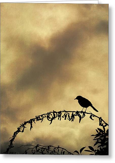 Bird On Branch Montage Greeting Card by Dave Gordon