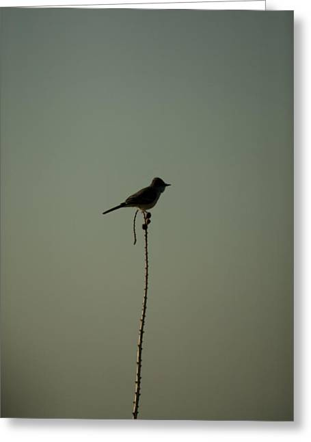Bird On Lechuguilla Greeting Card by Clyde Replogle