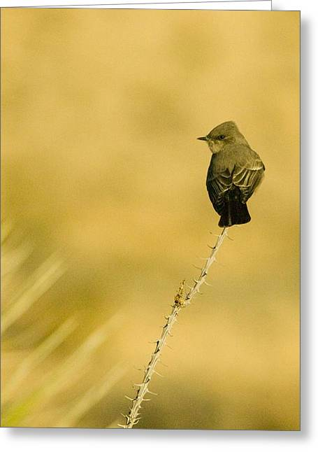 Bird On Ocotillo Greeting Card by Clyde Replogle