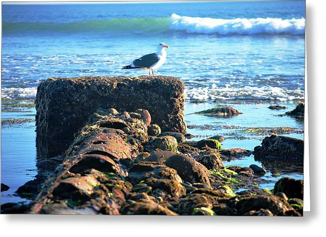 Bird On Perch At Beach Greeting Card