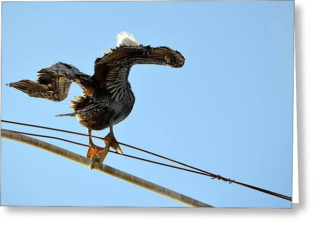 Greeting Card featuring the photograph Bird On The Wire by AJ Schibig