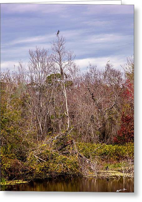Greeting Card featuring the photograph Bird Out On A Limb 3 by Madeline Ellis