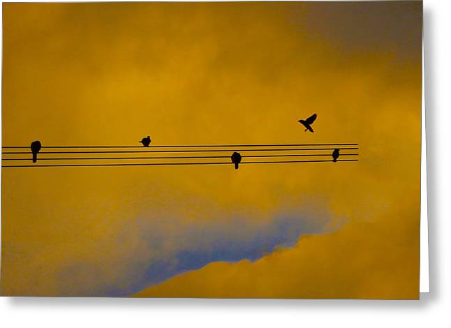 Bird Song Greeting Card by Mark Blauhoefer