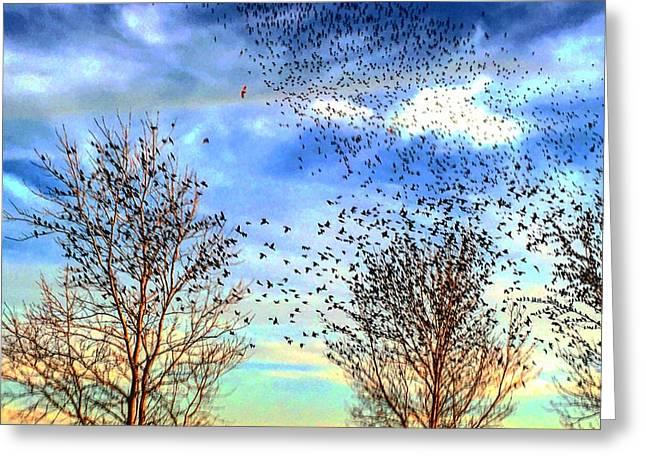 Bird Swarms Versus Hawks On The Prairie Greeting Card