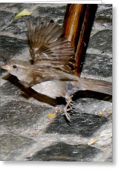 Bird Taking Flight Greeting Card by Sara Summers