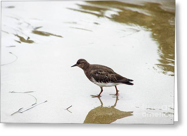Greeting Card featuring the photograph Bird Walking On Beach by Mariola Bitner