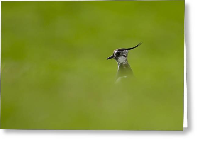 Bird-watching Greeting Card by Gabor Pozsgai