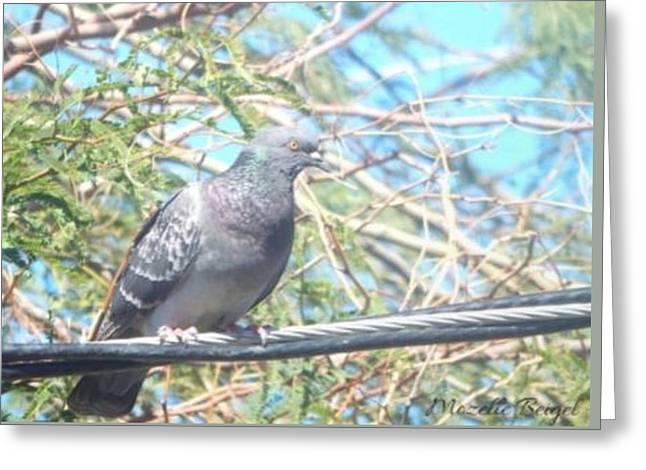 Bird Watchman Greeting Card
