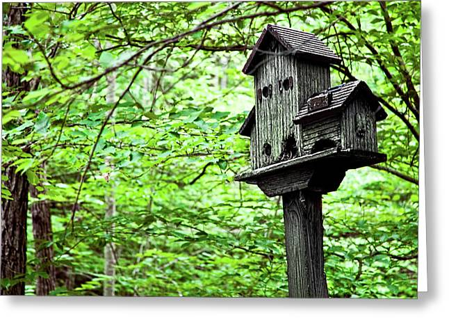 Birdhouse Among Nature's Birdhouses Greeting Card