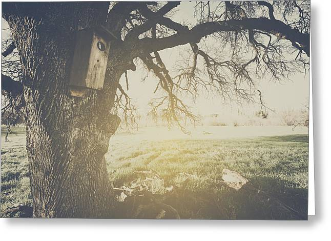 Birdhouse On A Tree With Vintage Style Filter Greeting Card