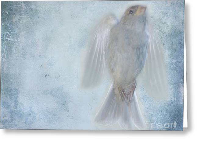 Birdness Greeting Card by Jim Wright