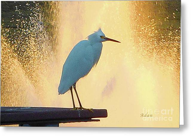 Birds And Fun At Butler Park Austin - Birds 3 Detail Macro Greeting Card by Felipe Adan Lerma