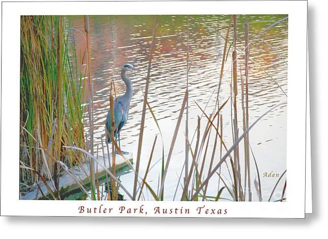 Birds And Fun At Butler Park Austin - Birds 4 Poster Greeting Card Greeting Card by Felipe Adan Lerma