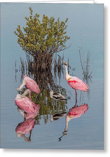 Birds And Mangrove Bush Greeting Card