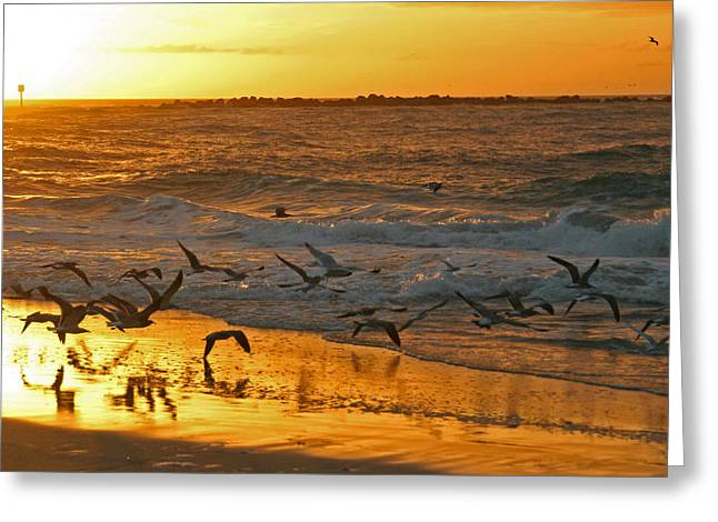 Greeting Card featuring the photograph Birds At Sunrise by Phil Mancuso