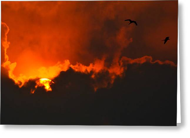 Birds At Sunset Greeting Card by Bibi Romer