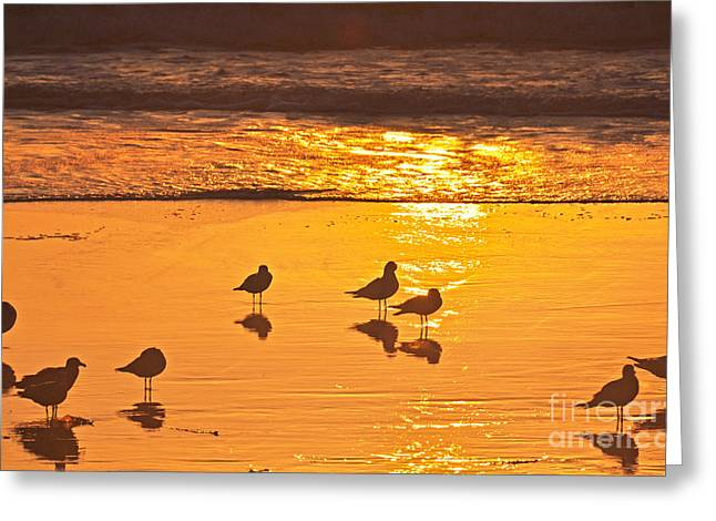 Birds At Sunset Greeting Card by Loriannah Hespe