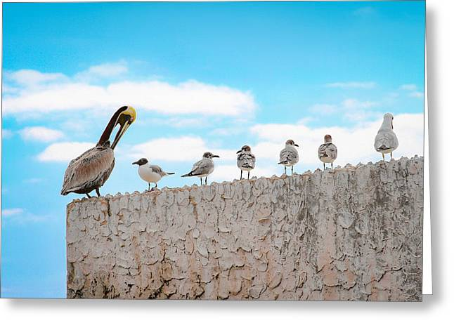 Birds Catching Up On News Greeting Card