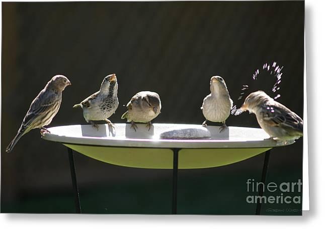 Birds Drinking From Bird Bath In Summer Sunshine Greeting Card by Gordon Wood