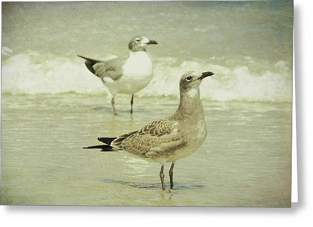 Seabirds View Greeting Card by JAMART Photography