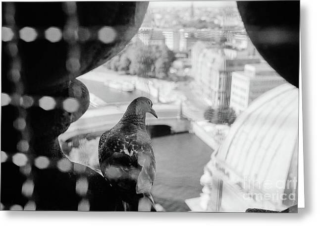 Greeting Card featuring the photograph Bird's Eye View Of Berlin by Dean Harte