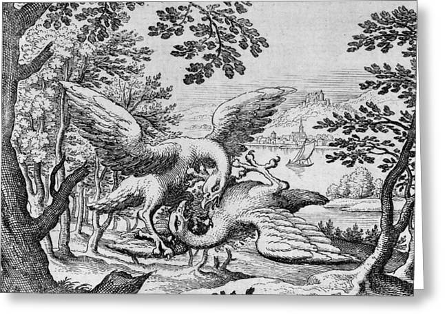 Birds Fighting From Musaeum Hermeticum, 1678 Greeting Card