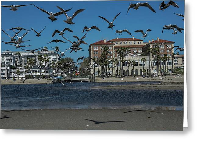 Birds Flight From The Right Of Passage Greeting Card by Kenneth James