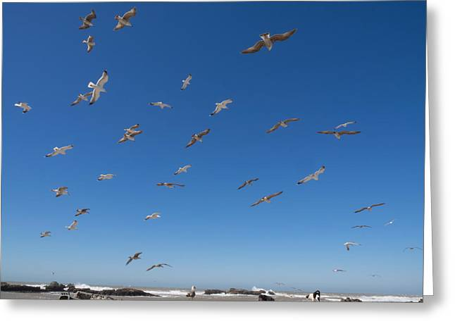 Birds Flying Along The Waters Edge Greeting Card by Panoramic Images