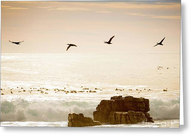 Birds Flying Over Ocean Greeting Card by Tim Hester