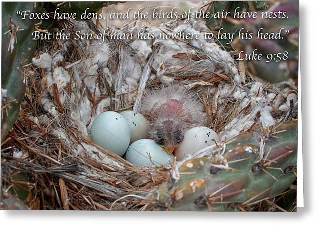 Birds Have Nests Greeting Card by Mary Lee Dereske