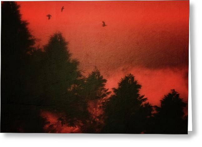 Greeting Card featuring the photograph Birds In A Red Sky by Jan Keteleer