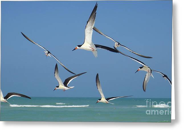 Birds In Paradise Greeting Card by Jan Daniels