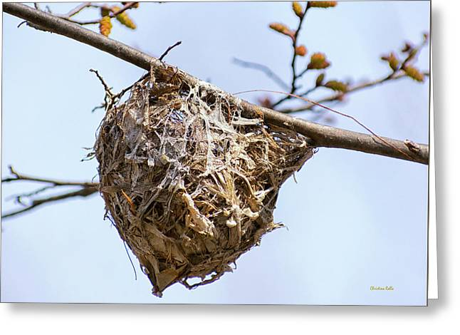 Greeting Card featuring the photograph Birds Nest by Christina Rollo
