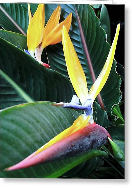 Birds Of Paradise With Leaves Greeting Card