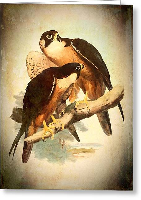 Birds Of Prey 2 Greeting Card