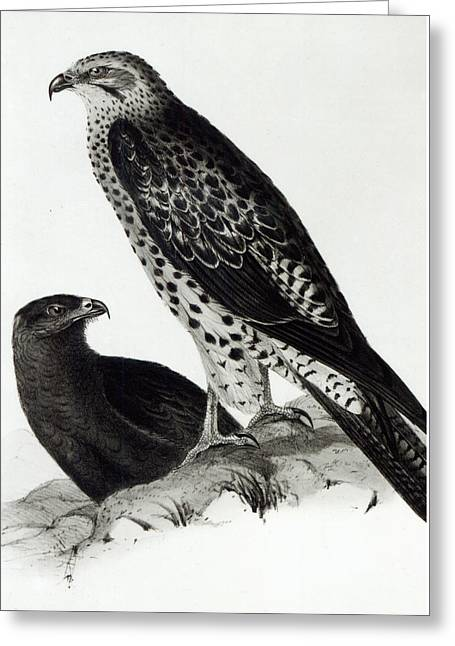 Birds Of Prey Greeting Card by Charles Darwin