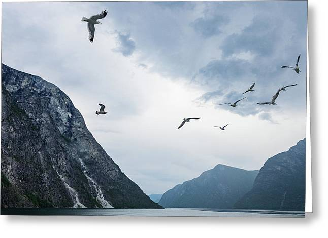 Birds Of The Fjords Of Norway Greeting Card