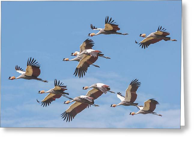 Birds Of The Same Feather. Greeting Card