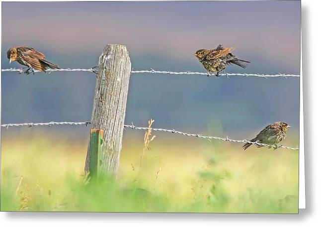 Greeting Card featuring the photograph Birds On A Barbed Wire Fence by Jennie Marie Schell