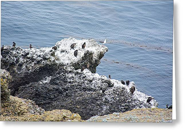 Birds On A Rock In Point Lobos State Reserve Near Monterey-california Greeting Card by Ruth Hager