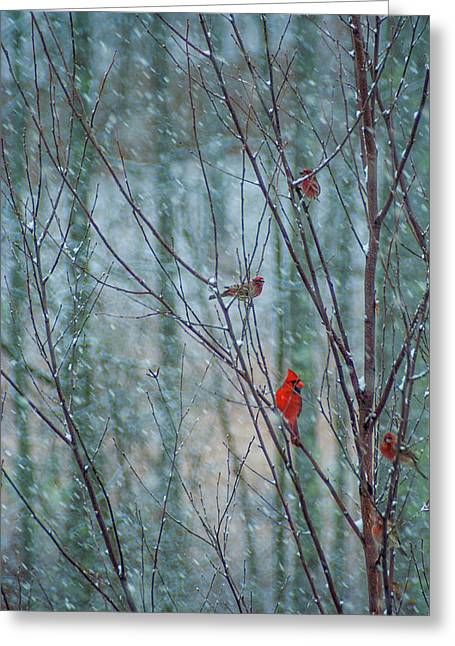Birds On A Snowy Day Greeting Card