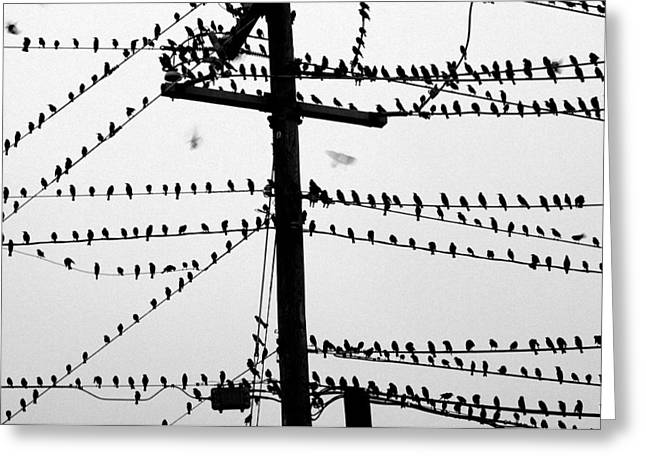 Birds On A Wire Greeting Card by Don Prioleau