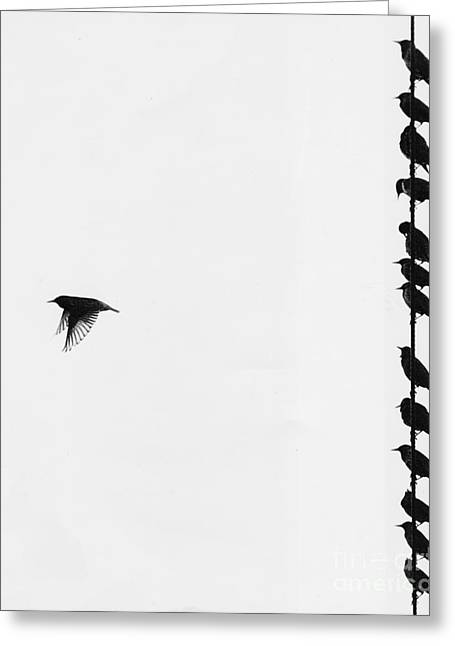 Birds On A Wire Greeting Card by Jim Wright