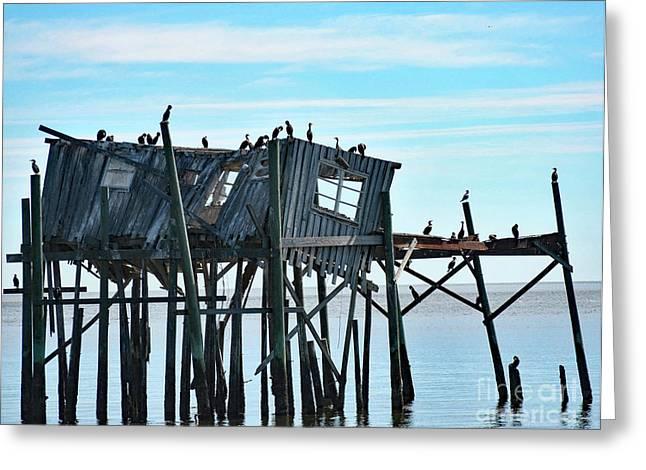 Birds On A Wreck Greeting Card by Pam Schmitt