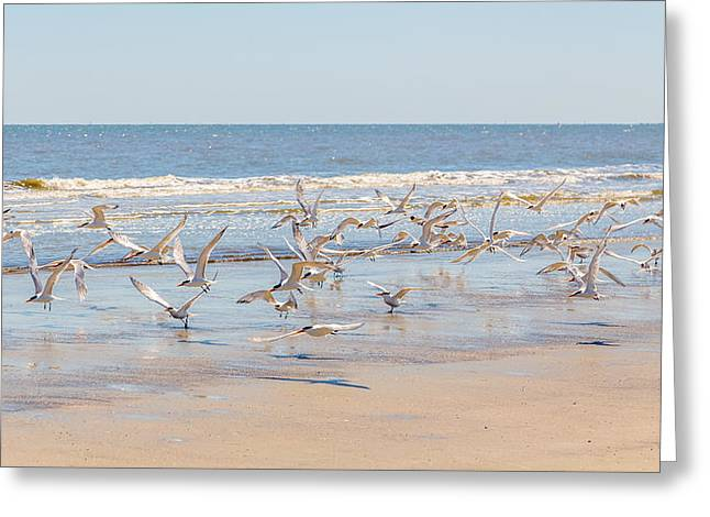 Birds On Cumberland Island 2 Greeting Card