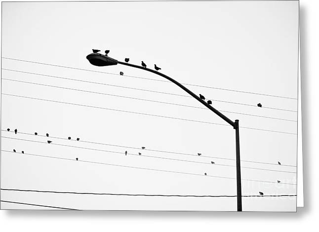 Birds On Power Lines And Lamp Post Greeting Card by Eddy Joaquim