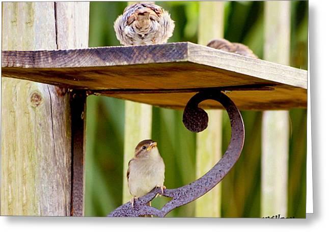 Birds On The Feeder Greeting Card