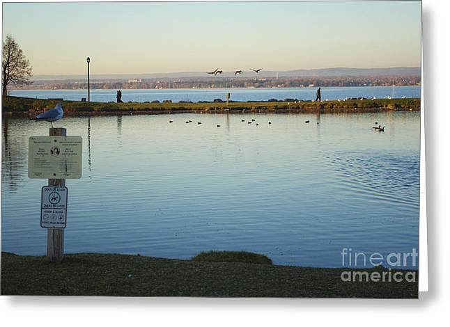 Birds On The Ottawa River Greeting Card