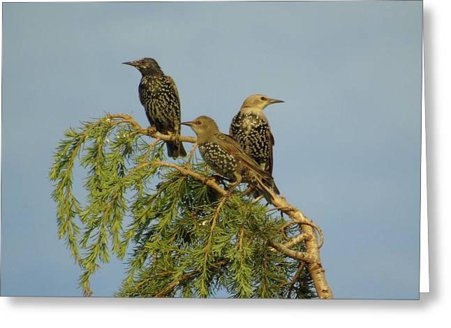 Birds-on-watch Greeting Card by Gordon Auld